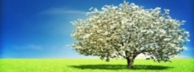 money-tree-940x350[1]